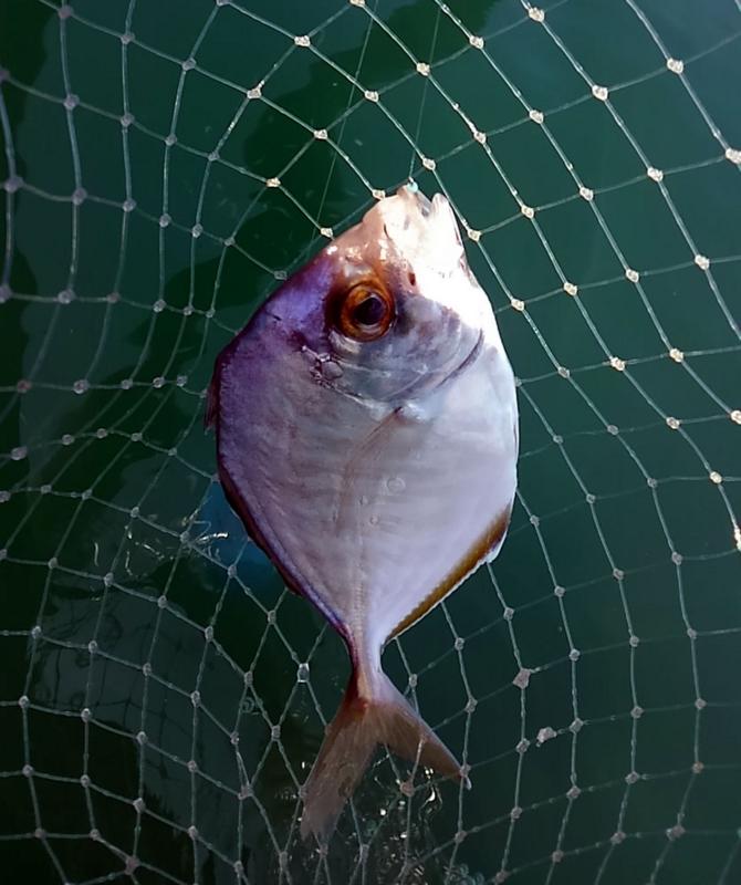 f:id:familyfishing:20180716092002j:plain