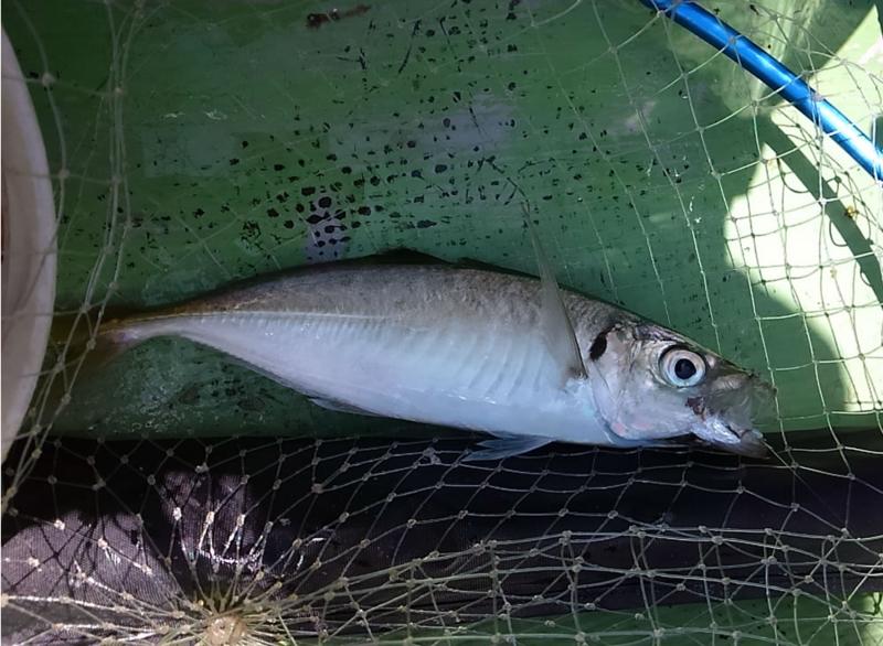 f:id:familyfishing:20180716092003j:plain