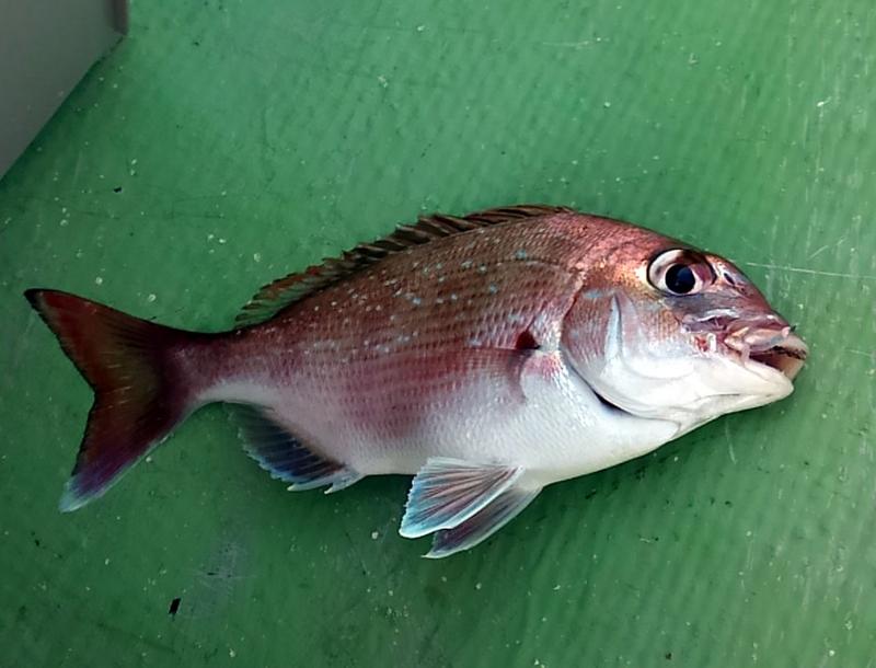 f:id:familyfishing:20180716092008j:plain