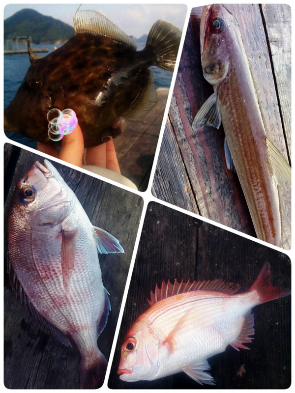 f:id:familyfishing:20180727100614j:plain