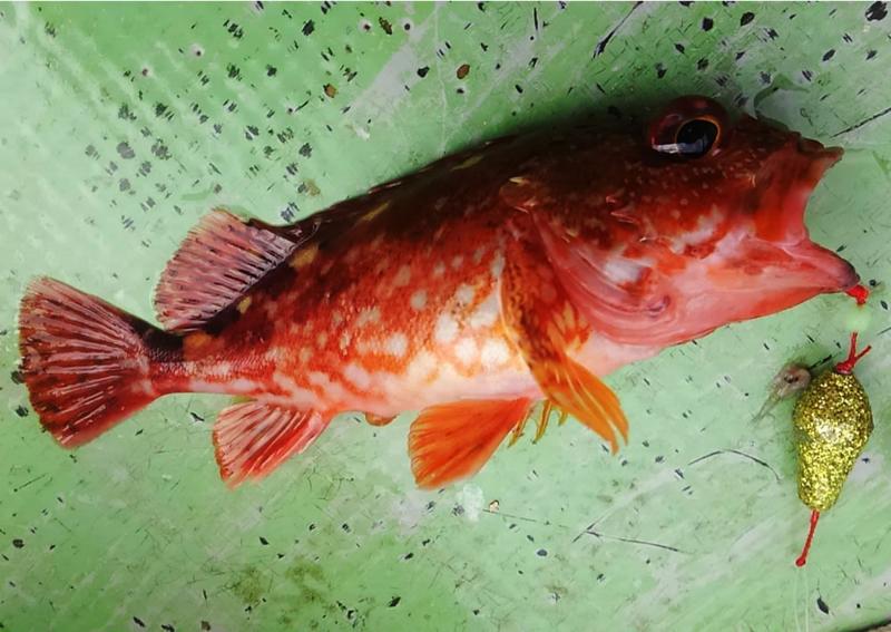 f:id:familyfishing:20180813215456j:plain