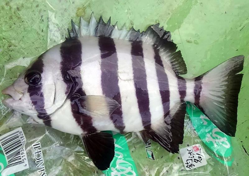 f:id:familyfishing:20180813215458j:plain