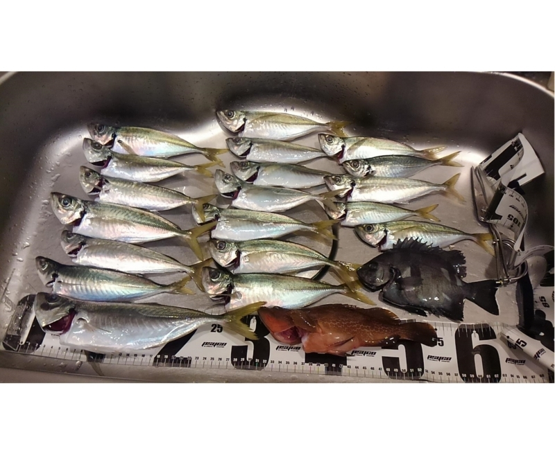 f:id:familyfishing:20180813215502j:plain