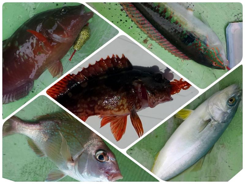 f:id:familyfishing:20180813215505j:plain