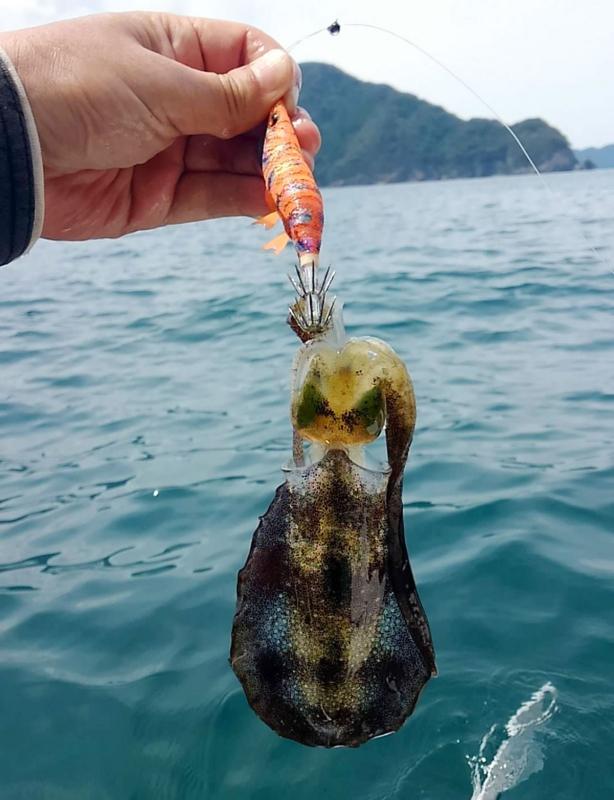 f:id:familyfishing:20180822194814j:plain
