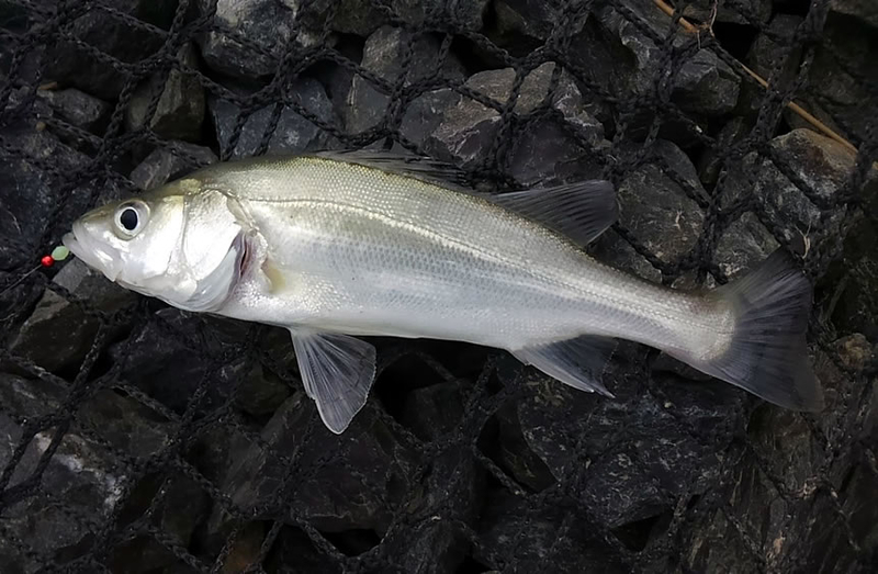 f:id:familyfishing:20180908185945j:plain