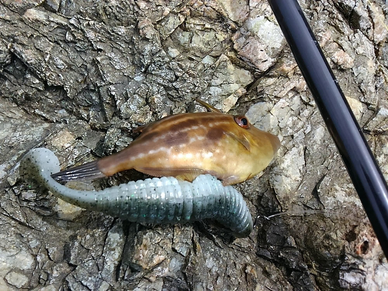 f:id:familyfishing:20180914205319j:plain