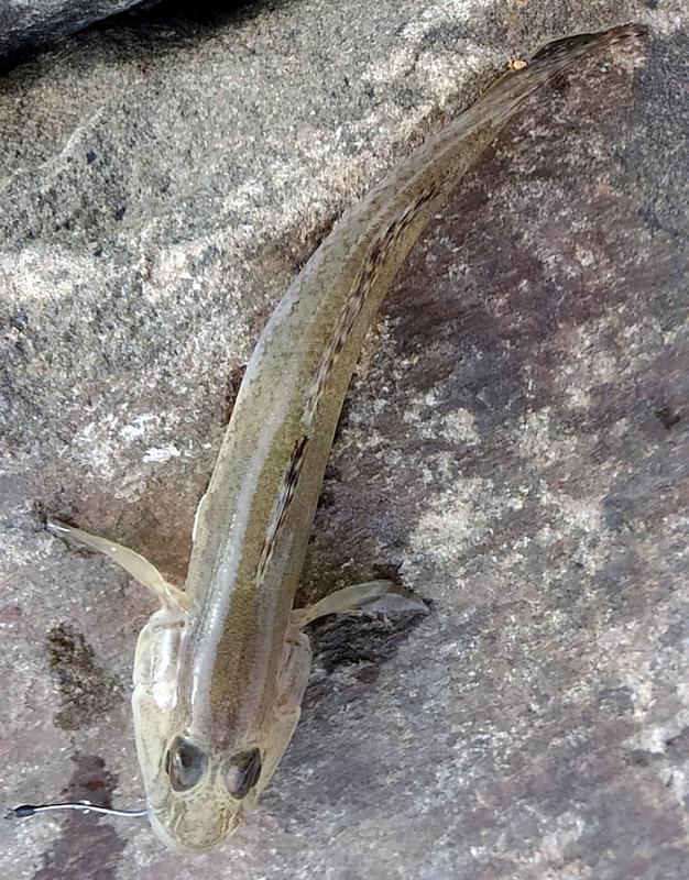 f:id:familyfishing:20180917173343j:plain