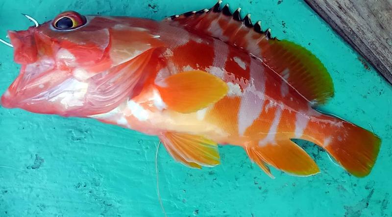 f:id:familyfishing:20181011224709j:plain