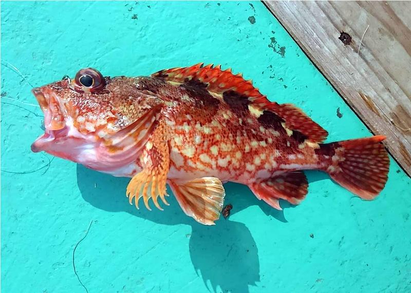 f:id:familyfishing:20181011224710j:plain