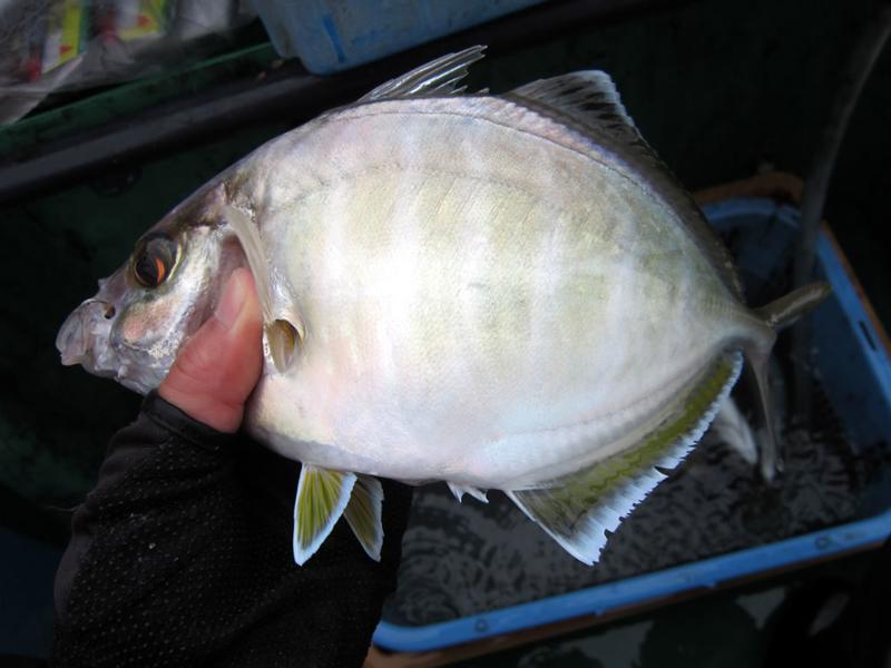 f:id:familyfishing:20181106185630j:plain