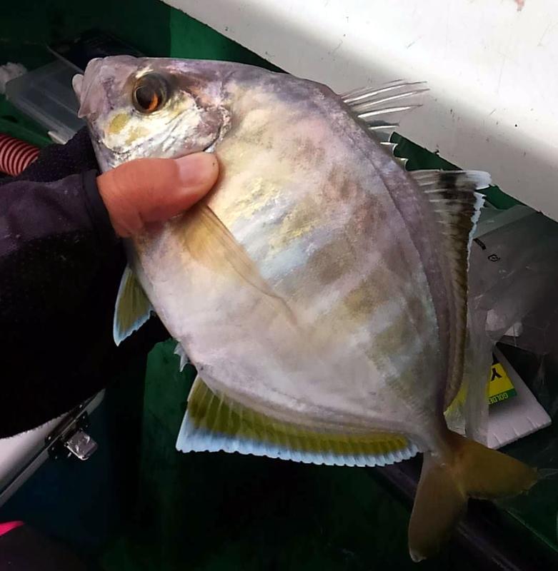 f:id:familyfishing:20181106195821j:plain
