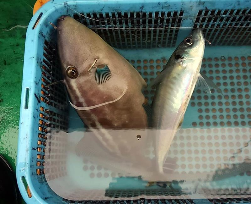 f:id:familyfishing:20181106195825j:plain