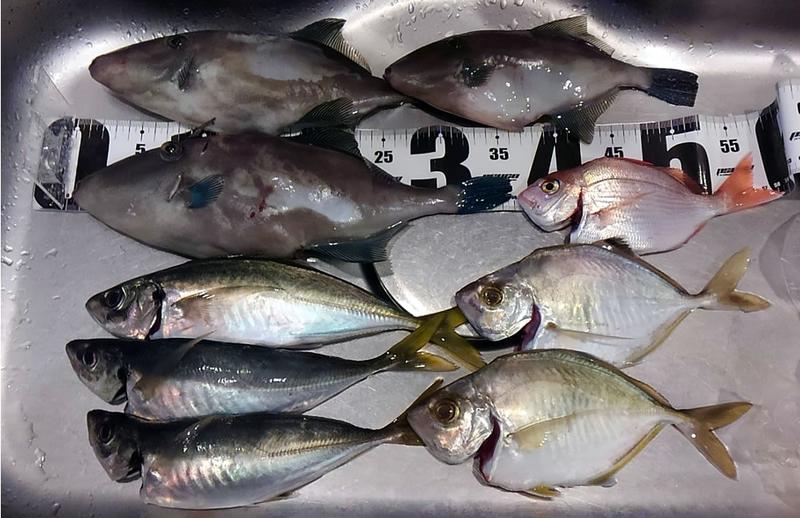 f:id:familyfishing:20181106195829j:plain