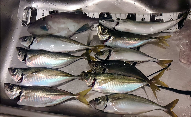 f:id:familyfishing:20181113195832j:plain
