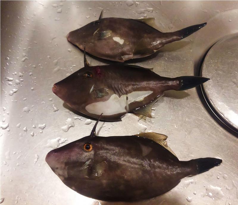 f:id:familyfishing:20181129214340j:plain