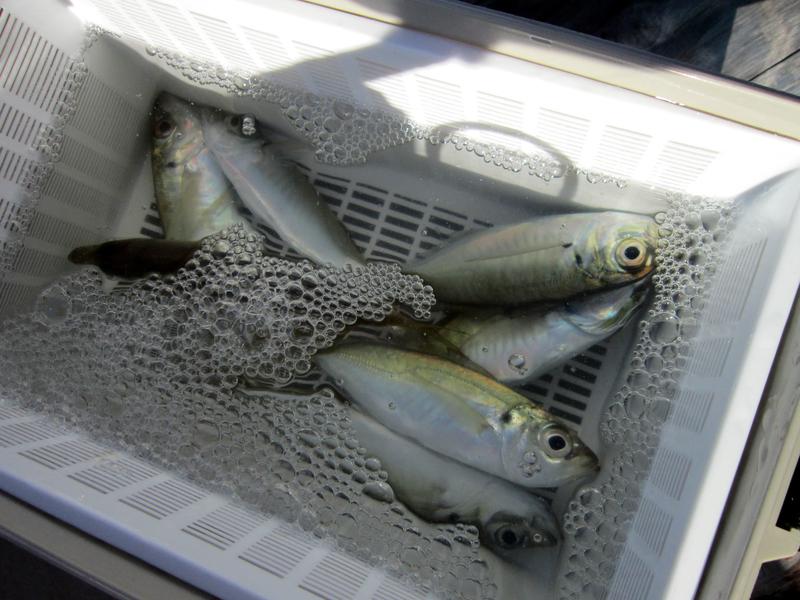 f:id:familyfishing:20181218215135j:plain