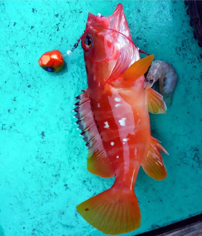 f:id:familyfishing:20181224082531j:plain