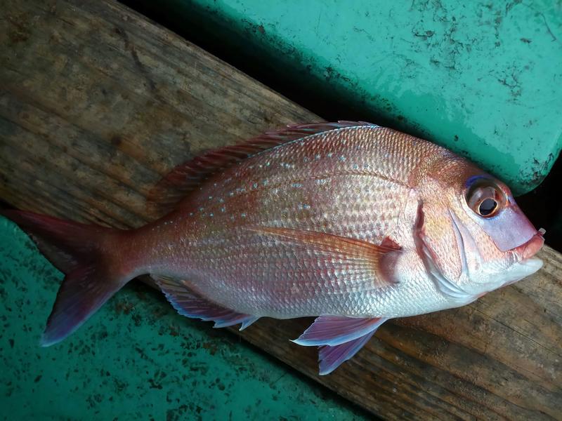 f:id:familyfishing:20181224082548j:plain