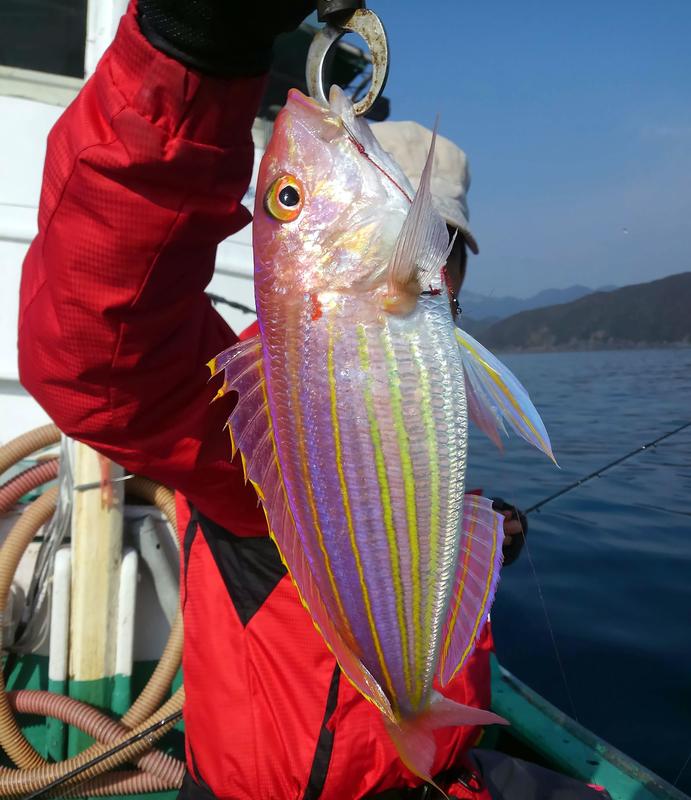 f:id:familyfishing:20181224082627j:plain