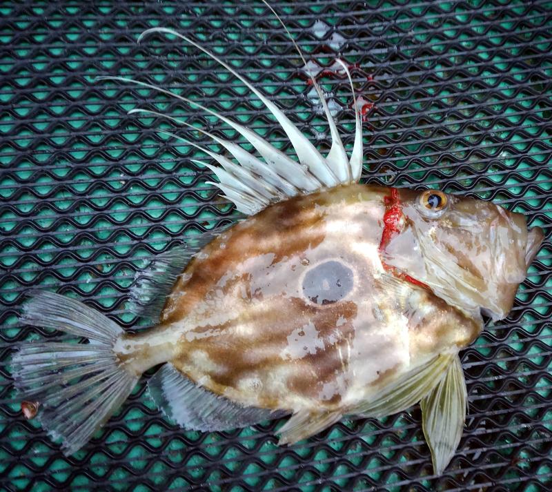 f:id:familyfishing:20181224082632j:plain