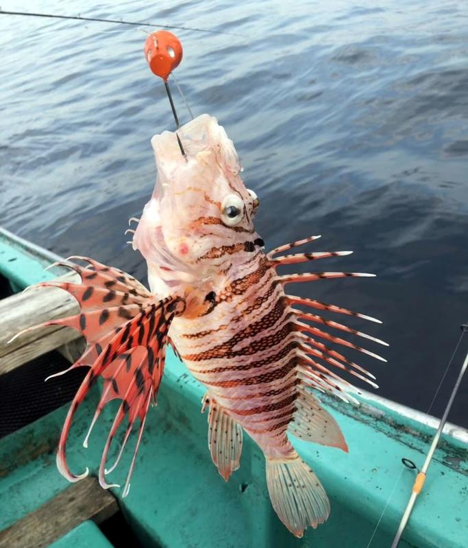 f:id:familyfishing:20181224082701j:plain
