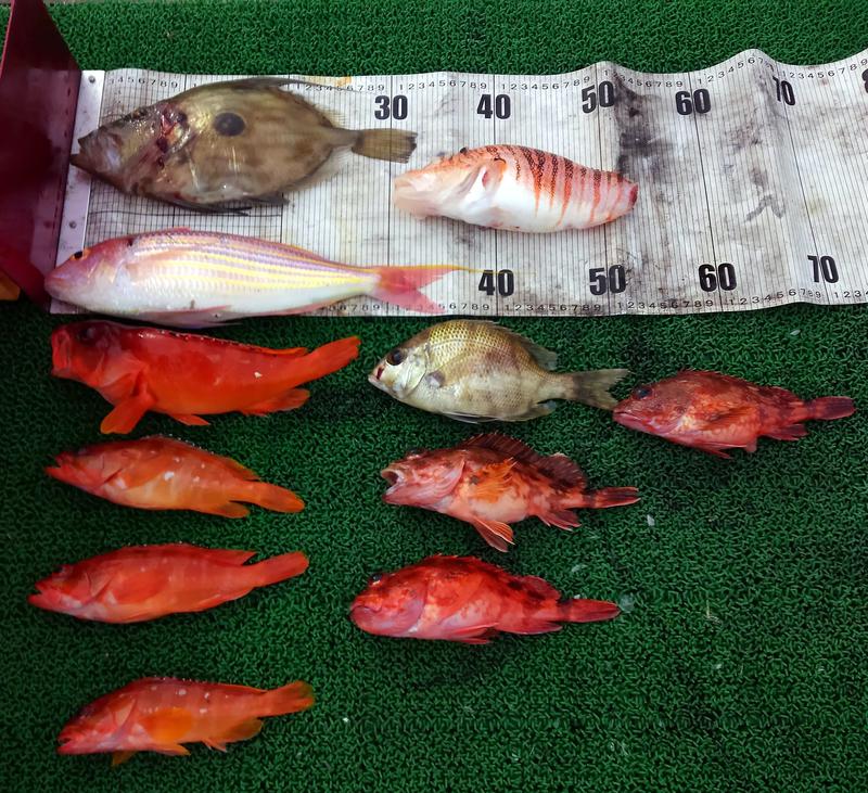 f:id:familyfishing:20181224082710j:plain