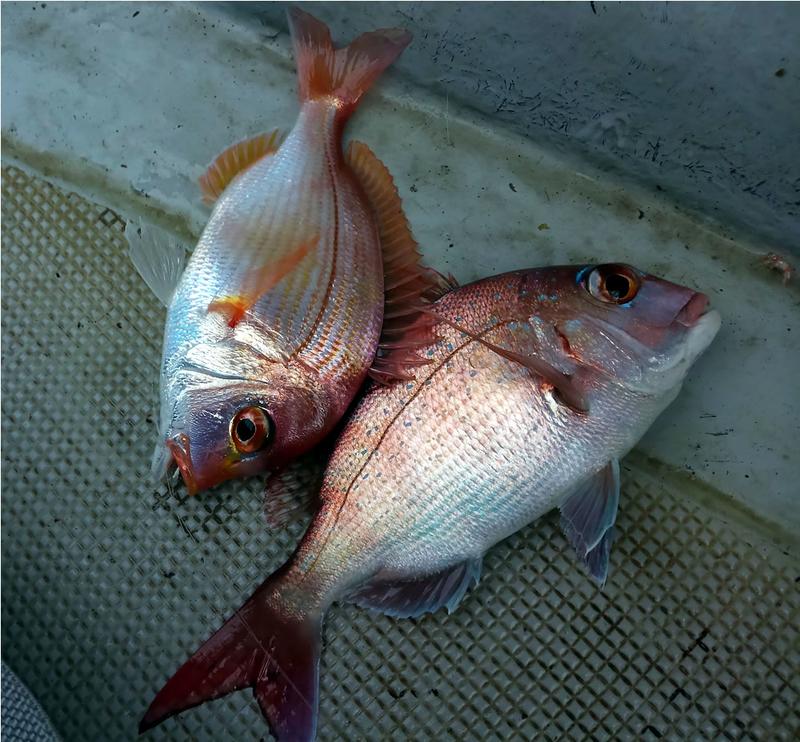 f:id:familyfishing:20190116001340j:plain