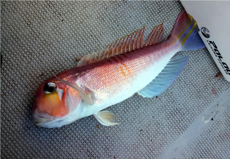 f:id:familyfishing:20190116001343j:plain