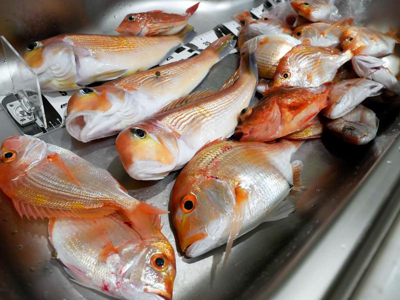 f:id:familyfishing:20190116001351j:plain