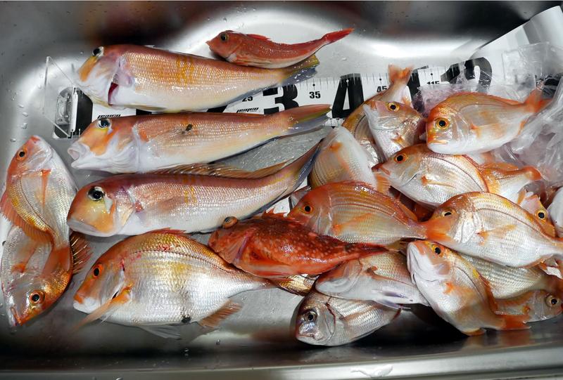 f:id:familyfishing:20190116001352j:plain