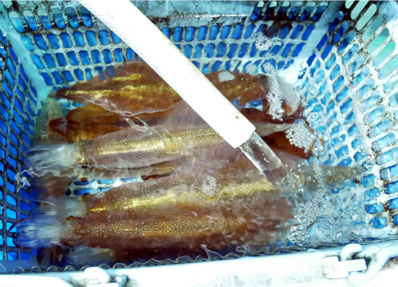 f:id:familyfishing:20190213005950j:plain