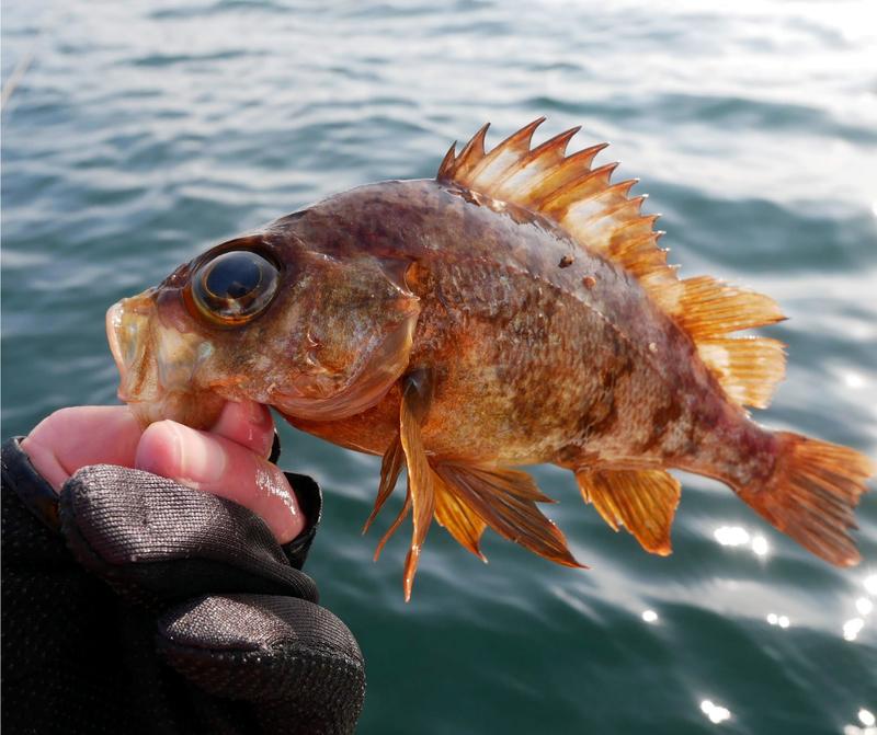 f:id:familyfishing:20190226005514j:plain