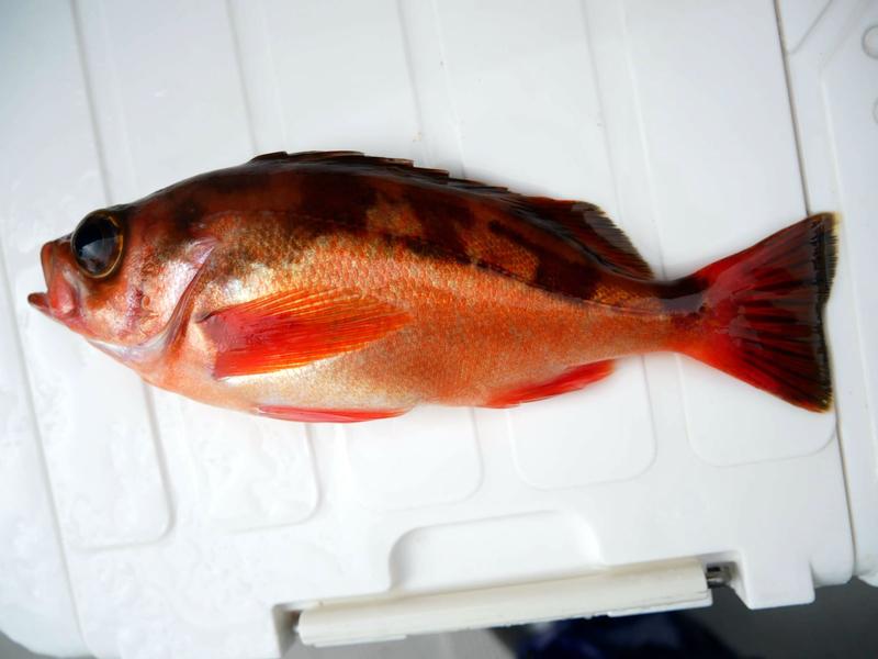 f:id:familyfishing:20190401234043j:plain