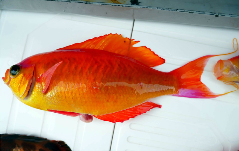 f:id:familyfishing:20190401234045j:plain
