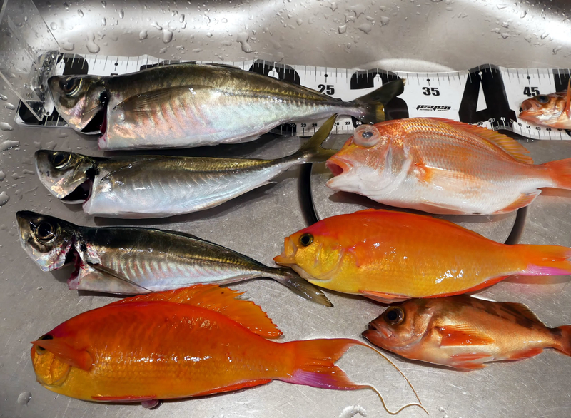 f:id:familyfishing:20190401234049j:plain