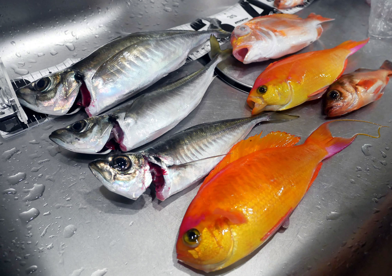 f:id:familyfishing:20190403222905j:plain