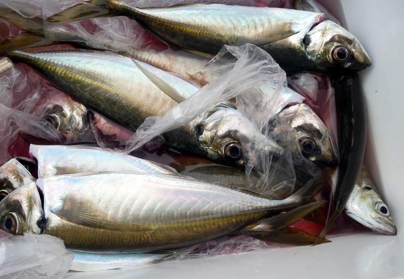 f:id:familyfishing:20190414231840j:plain
