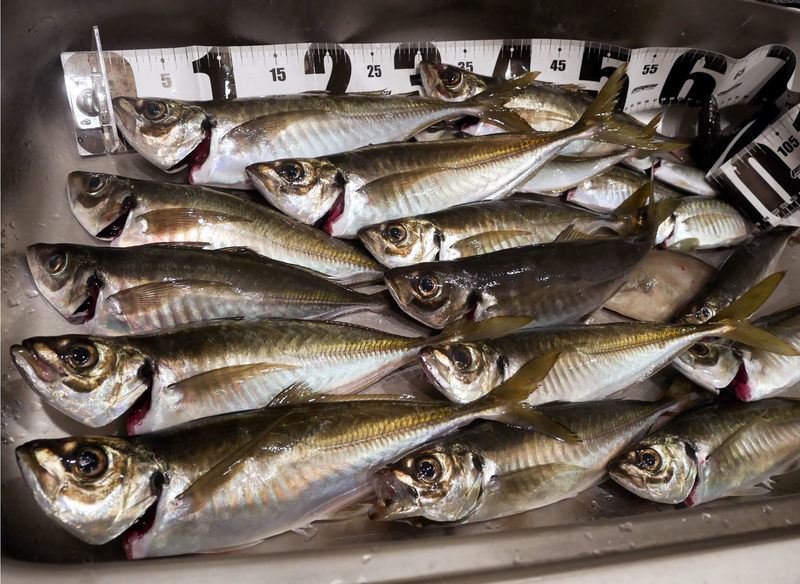 f:id:familyfishing:20190414231848j:plain