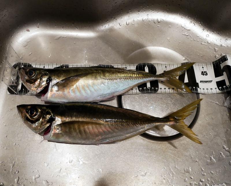 f:id:familyfishing:20190414231850j:plain