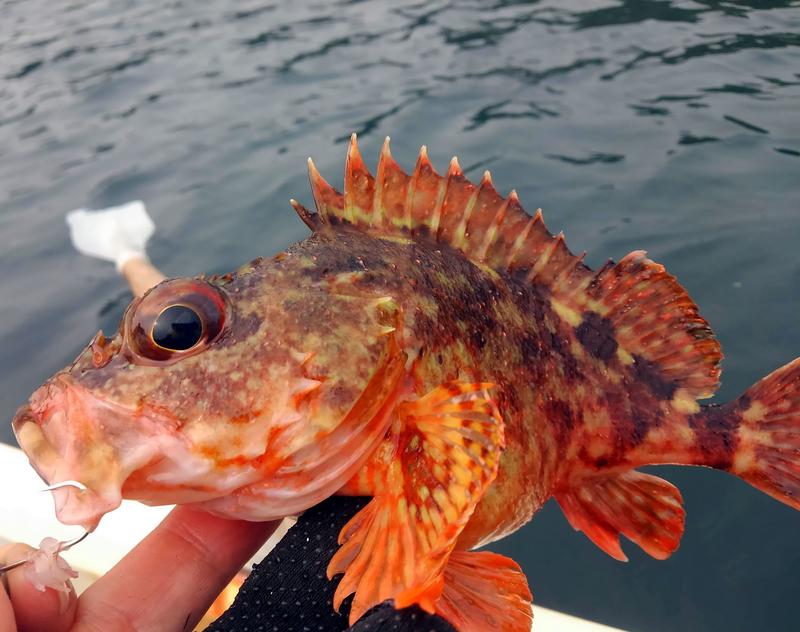 f:id:familyfishing:20190421234736j:plain