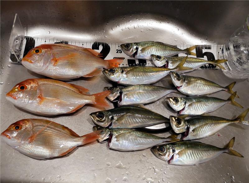 f:id:familyfishing:20190430212119j:plain