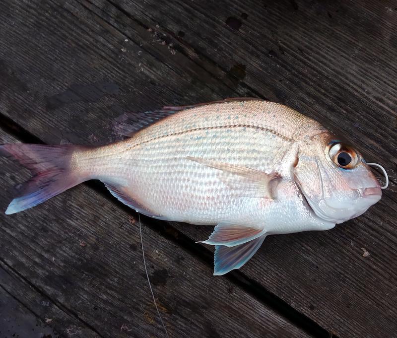 f:id:familyfishing:20190430212245j:plain