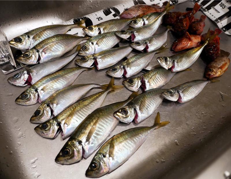 f:id:familyfishing:20190506083334j:plain