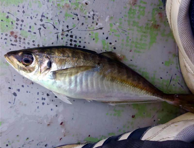 f:id:familyfishing:20190506083343j:plain