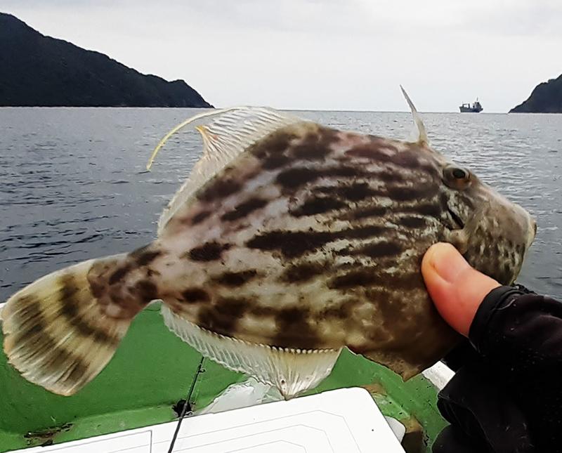 f:id:familyfishing:20190716071540j:plain