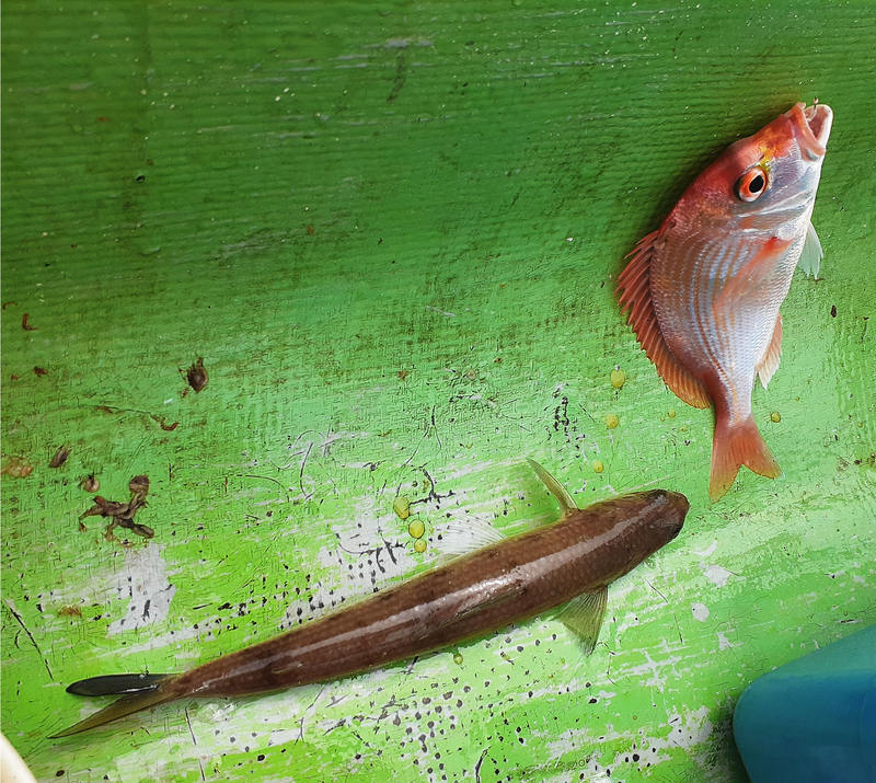 f:id:familyfishing:20190716071558j:plain