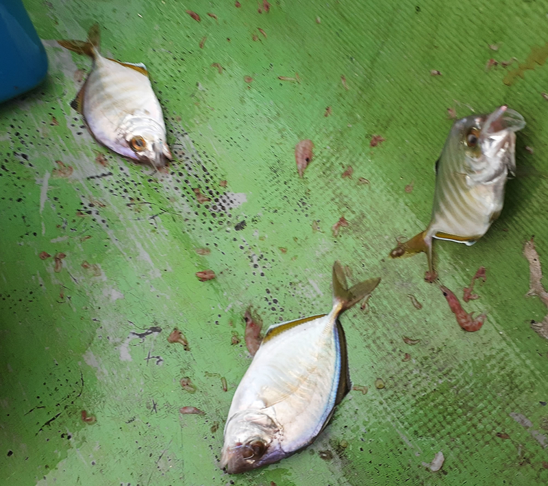 f:id:familyfishing:20190716071615j:plain