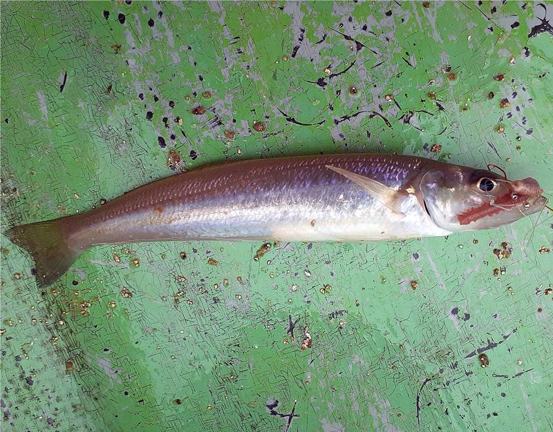 f:id:familyfishing:20190716071634j:plain