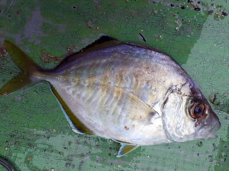 f:id:familyfishing:20190716071715j:plain